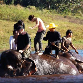 moi sur l'éléphant !